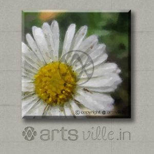 Artsville-online-art-in-india-white-daisy-flower-P000024C